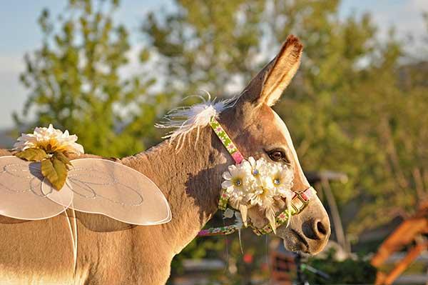 Bride Fantasy Donkey