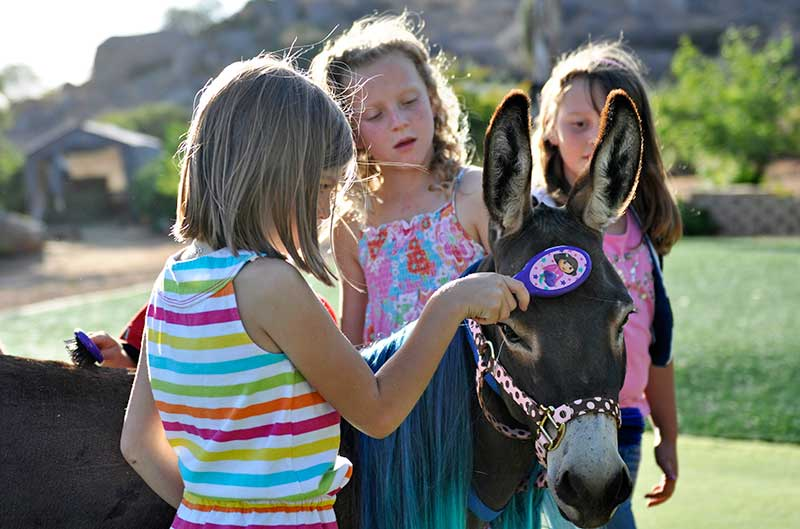Girls Brushing a Fantasy Donkey