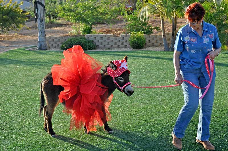 Kim Walking Fanasy Donkey in Red Costume