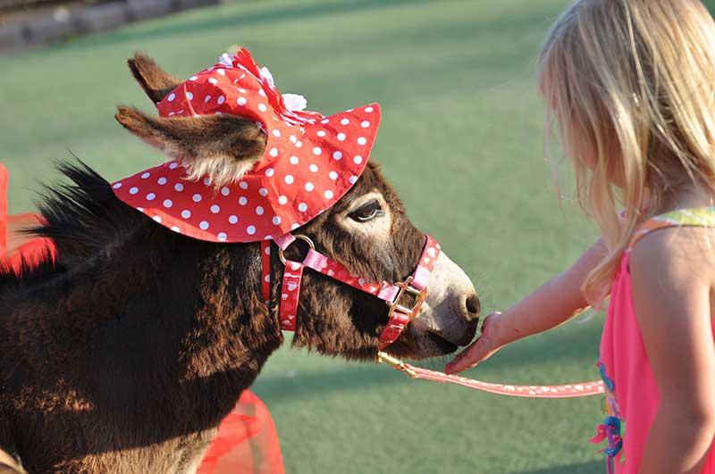 Little girl feeding Fantasy Donkey