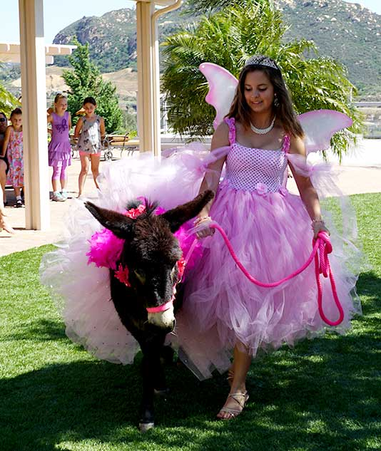 Fantasy Donkeys Fairy Godmother