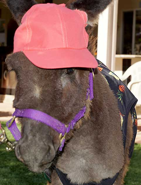 Donkey in cap